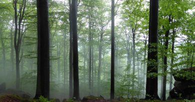 Góry Izerskie, lasy bukowe.